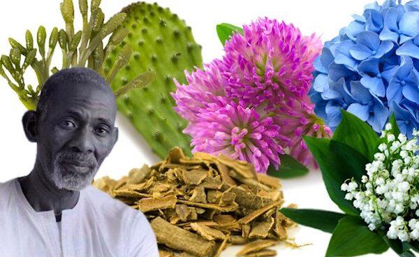 Dr Sebi's Food List - ital is vital