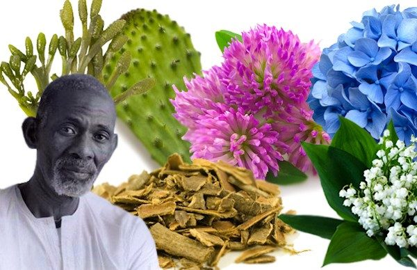 Dr Sebi food list