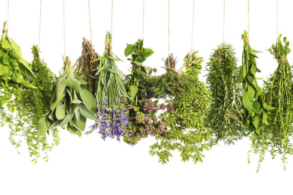 Herbs - medicinal and culinary
