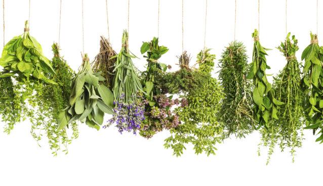 Herbs - medicinal and culinary