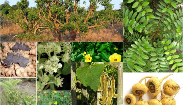 Nature's Viagra - 18 Herbs Scientifically Proven as