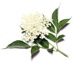 how to cure herpes, elder flower herb