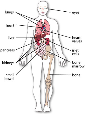 organs in the body