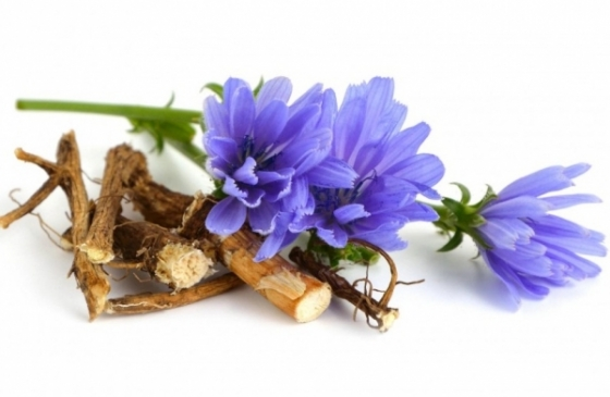 Chicory - flower and root