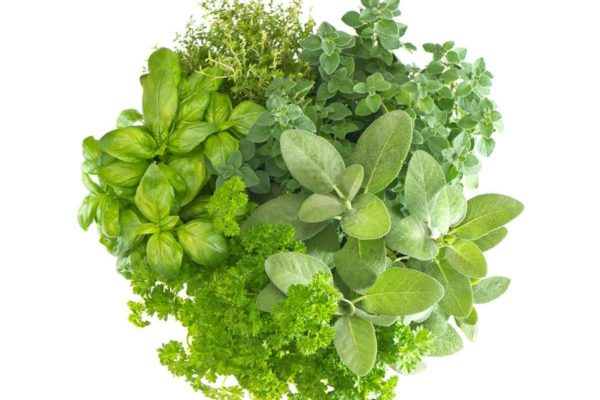 Herbs - how to use herbs