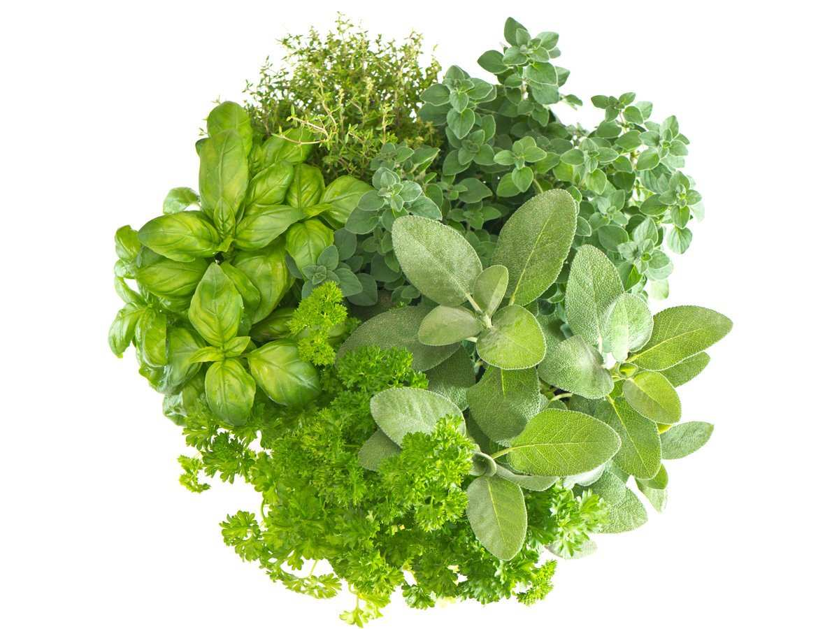 Ayurvedic medicinal plants for Alzheimer's disease: a review