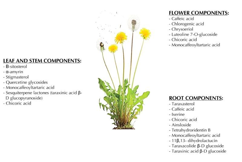 Dandelion components