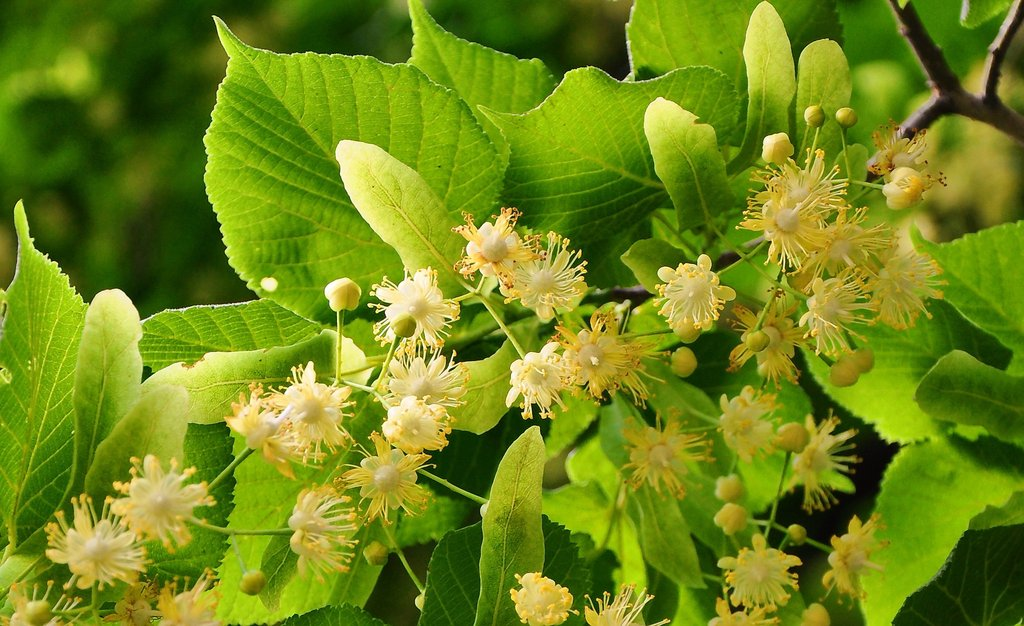 Dr Sebi Green Food Plus Ingredients & How To Make Green Food Plus