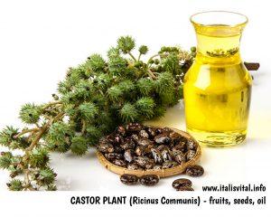 Castor Plant - Fruit, Seed, Oil
